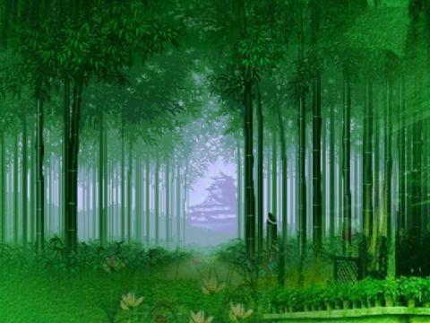 月光下的凤尾竹 - 葫芦丝flash